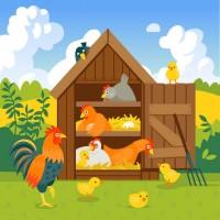 Poulailler pour 2 à 3 poules