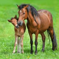 Soins naturels pour chevaux poneys et ânes